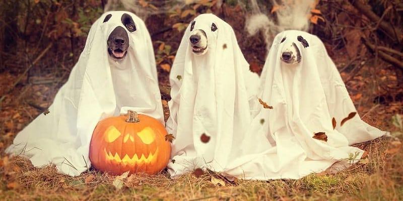 Noč čarovnic 2018 kostumi in dekoracija