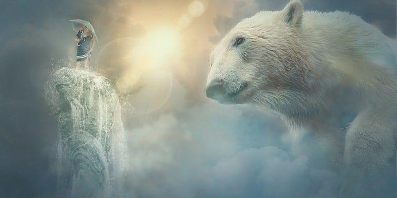 Sanje o medvedu