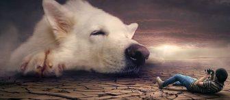 Pomen sanj | Sanjati psa
