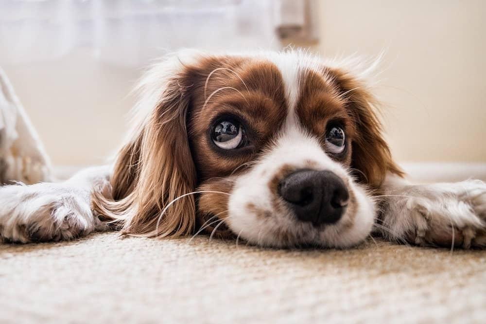 odgovoren lastnik psa
