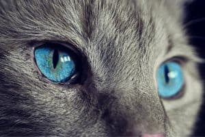 Sanje o mačkah